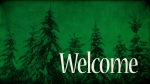 Wintergreen Trees: Welcome